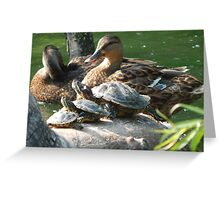 Wildlife in All Sizes Greeting Card