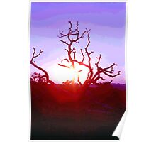 Sunset through Silhouetted Tree in Desert (1) Poster