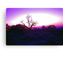 Sunset through Silhouetted Tree in Desert (2) Canvas Print