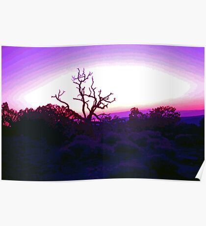 Sunset through Silhouetted Tree in Desert (2) Poster