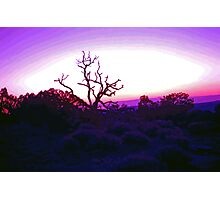 Sunset through Silhouetted Tree in Desert (2) Photographic Print