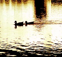Ducks on Pond (1) by SteveOhlsen