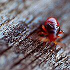 bug by Stefan Chirila