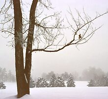 Foggy Morning Winter Landscape (16) by SteveOhlsen