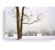 Foggy Morning Winter Landscape (16) Canvas Print