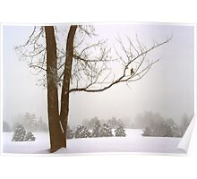 Foggy Morning Winter Landscape (16) Poster