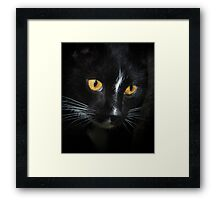 I Never touched da budgie... right.... Framed Print