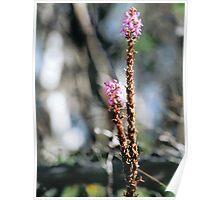 Bush Flower Poster