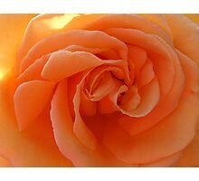 Peach Treat Photographic Print
