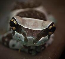 Blue Frog by Stefan Trenker
