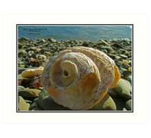Shell at the Beach Art Print