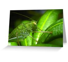 Katydid Greeting Card