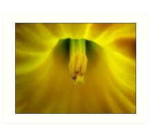 At the heart of a daffodil... Art Print