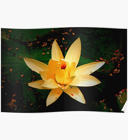 A day with water lily Poster