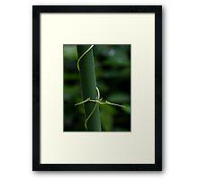 Climbing plant 40D0012885 Framed Print