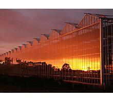 Glasshouse Sunset  Photographic Print