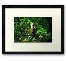 Cypress Knee Framed Print