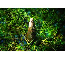 Cypress Knee Photographic Print
