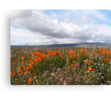 Antelope Valley California Poppy Reserve (prints only) Canvas Print