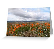 Antelope Valley California Poppy Reserve Greeting Card