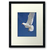 Seagull 20D0032100 Framed Print