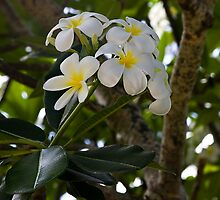 Tropical Flowers by David Chappell
