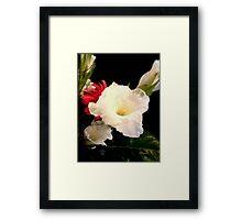 Stunning in White  Framed Print