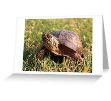 Eastern Box Turtle (Terrapene carolina carolina) XT0003823 Greeting Card