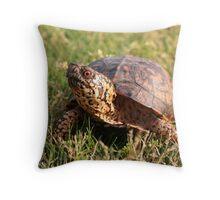 Eastern Box Turtle (Terrapene carolina carolina) XT0003823 Throw Pillow