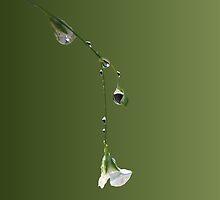 Dew Drop by Leah Highland