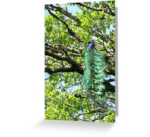 bird in a tree Greeting Card