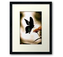 Butterfly or Fairy? Framed Print