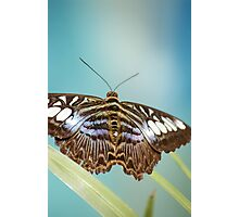 Colours of Life Photographic Print