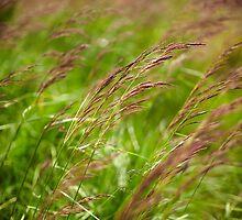 Closeup of grass by naturalis