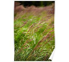 Closeup of grass Poster