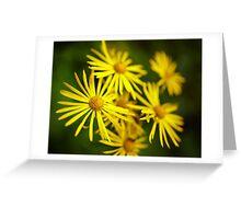 Wild yellow daisies Greeting Card