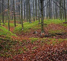 Enchanted forest in autumn by naturalis