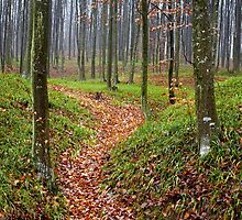 Forest alley by naturalis