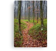 Forest alley Canvas Print
