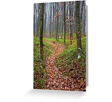 Forest alley Greeting Card