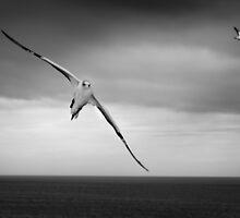 Flight by Peter Denniston
