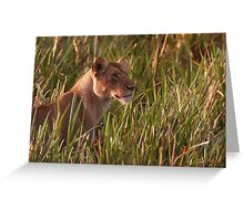 Lioness In The Marsh  Greeting Card