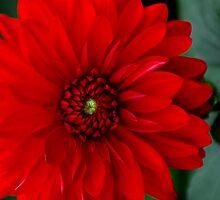 Red Passion by DavidROMAN