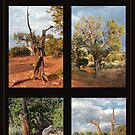 Old Tree Collage 1 by marybedy