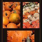 Pumpkin Patch by marybedy