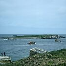 1st return boat leaves Farne for Sea Houses Bamburgh Northumberland England 198405280020m  by Fred Mitchell