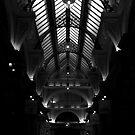 illuminated - b&w by LenaMay