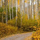 Fall drive in Colorado  by Luann wilslef