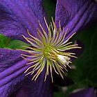 "Pretty ""n"" Purple by Darlene Ruhs"
