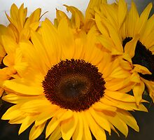 Sunflowers by Mystique
